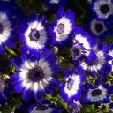 free_gorgeous_flowers_screensaver_28945